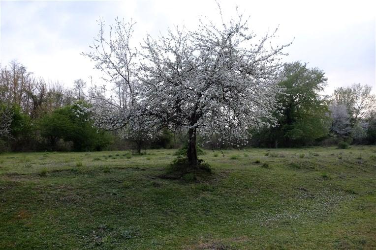igneada-longoz-ormanlari (18)