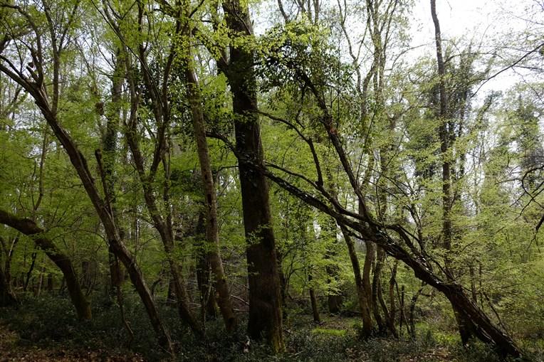 igneada-longoz-ormanlari (5)